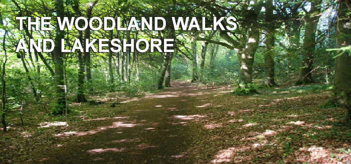 The Woodland Walks and Lakeshore